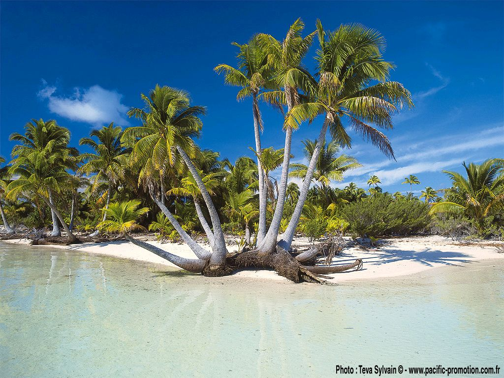 Fond d ecran de la Polynésie - Polynesienne - Vahine - Tahitienne ...
